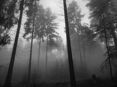 foggy_forest_2_10241.jpg